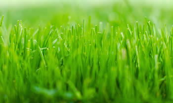 Lawn Service in Saint Louis MO Lawn Care in Saint Louis MO Lawn Mowing in Saint Louis MO Lawn Professionals in Saint Louis MO