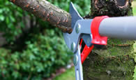 Tree Pruning Services in Saint Louis MO