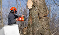 Tree Removal in Saint Louis MO